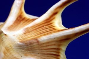 conchiglia-shell-1280x800[1]
